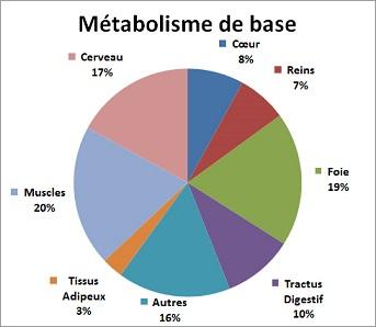 metabolisme-basal